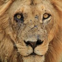 Sud Africa Natura Selvaggia